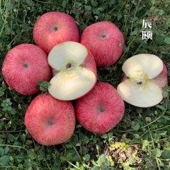 (代发)洛川苹果5斤装
