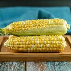 (代发)水果玉米9斤装
