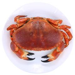 崇鲜 英国面包蟹 鲜活即食熟冻1600-1300克/2只 面包螃蟹发财蟹黄金蟹